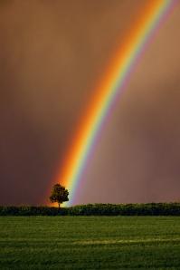 rainbow_tree_of_life
