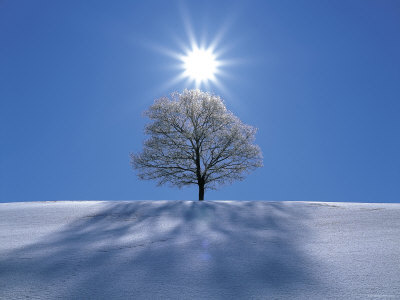 sun-snow-tree