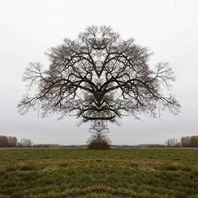 24x24_portland_tree2
