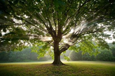 trees23-jpg_IM262