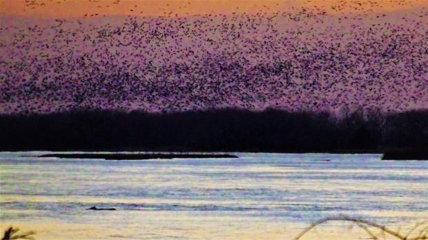 crane invasion