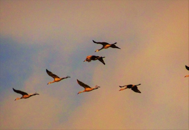 Pastel Cranes