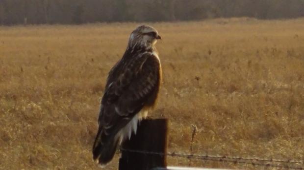 post hawk