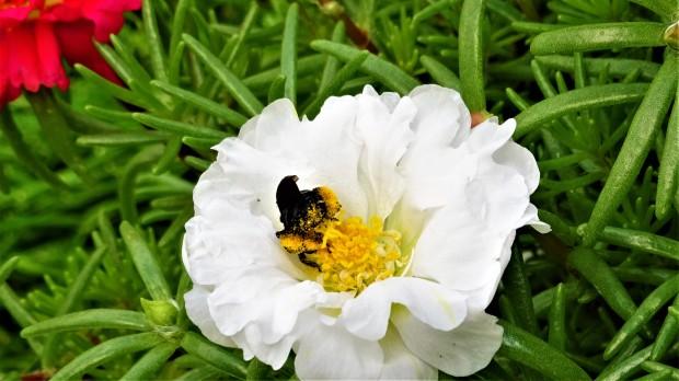 bee pollen happy