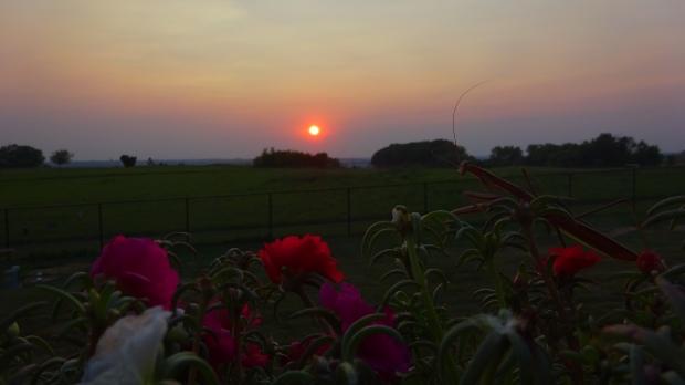 A Johnny Mantis sunset