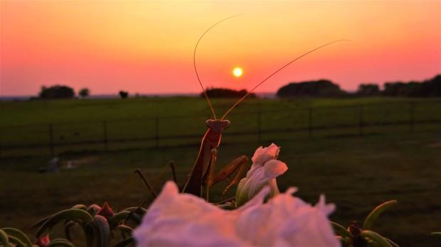 Johnny Mantis sunset