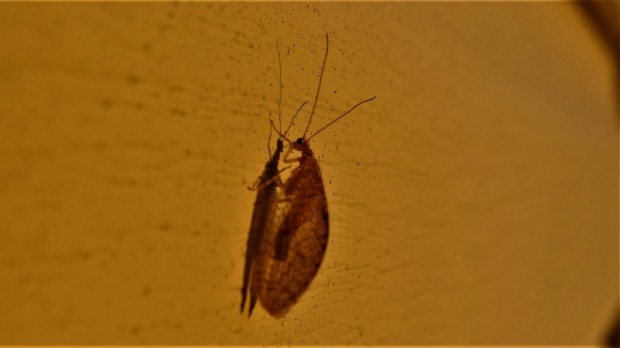 Insect mystery