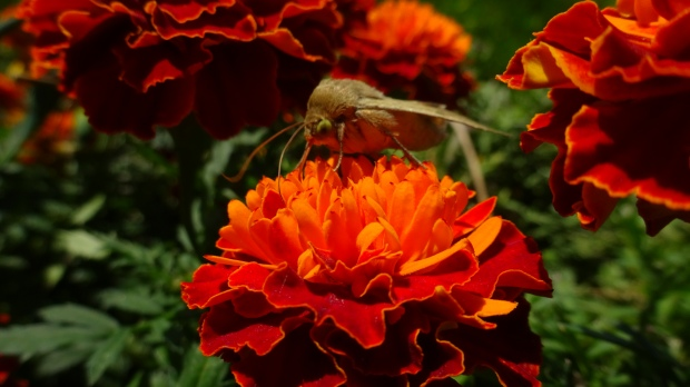 green-eyed lady bug