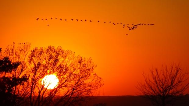 Great Plains great birds