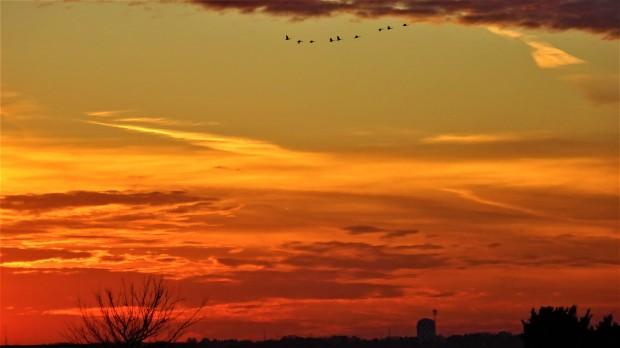 geese high