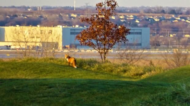 Fox looking back at UT