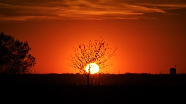 immortal tree sap