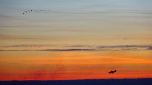 Geese Plane race