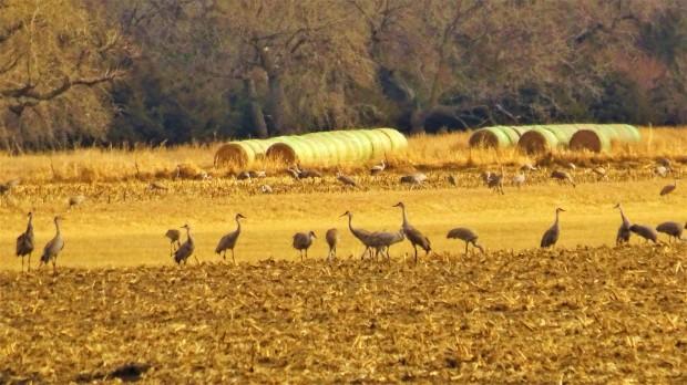 Hay Cranes