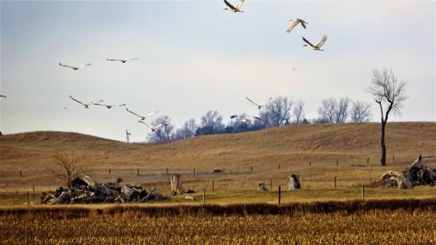 Crane Hill