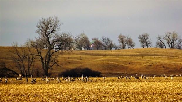 Nebraska farm view