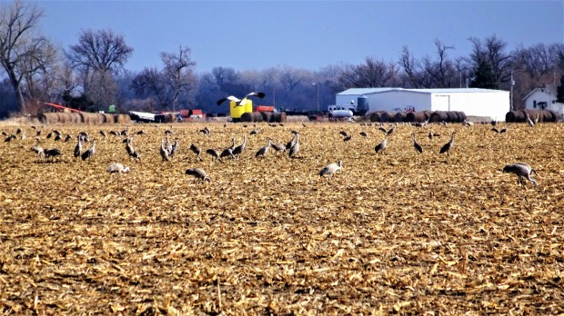 Great Plains Farms and Cranes