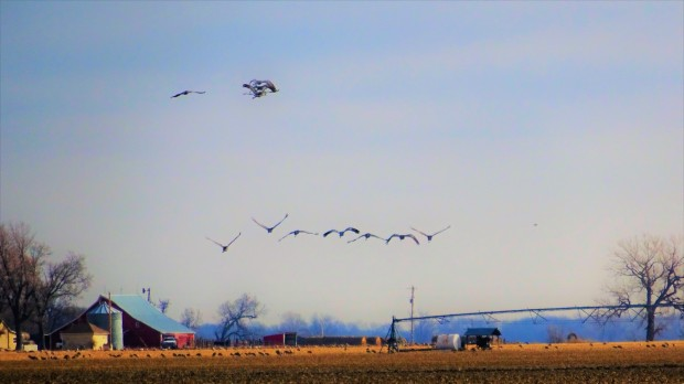 Crane Skies