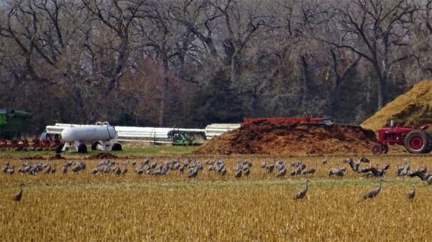 Crane feed