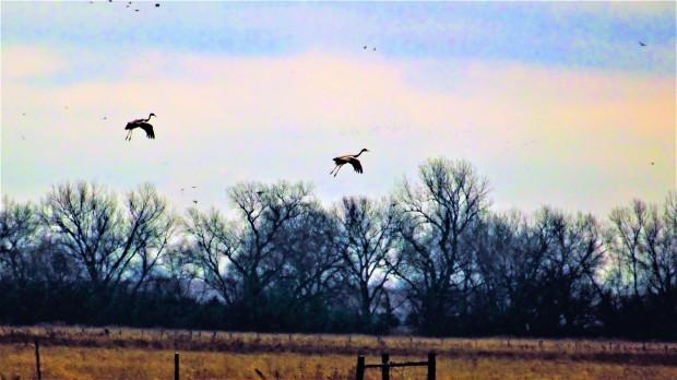 Parachuting cranes