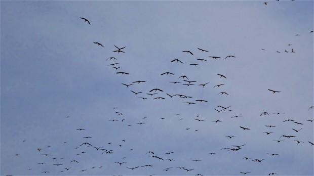 Crane blue sky