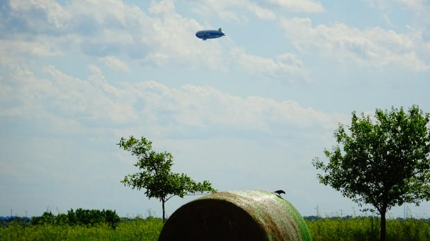 Blimp and Bird